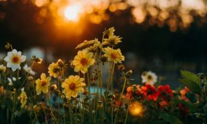 Finden Sie heraus, welche Blume zu Ihrem Sternzeichen passt