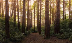 Heilung durch Bäume
