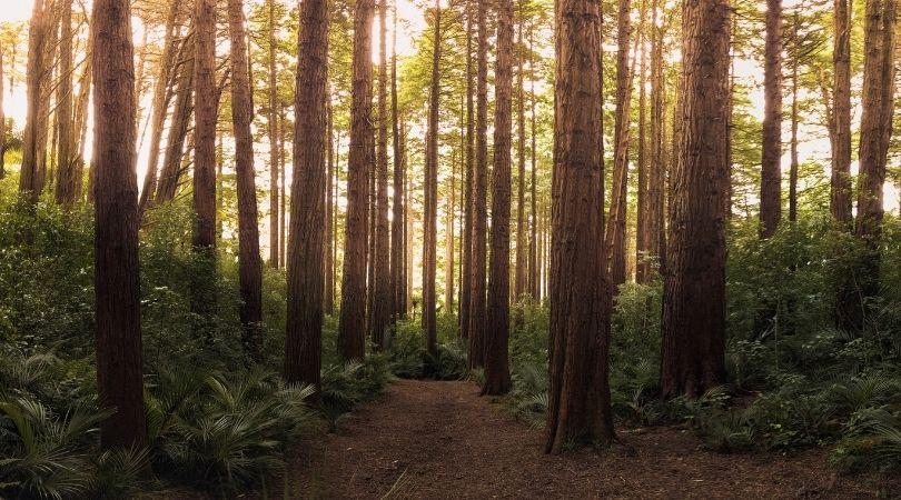 Können dich bäume heilen