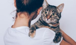 Lektionen fürs Leben, die man von Tieren lernen kann